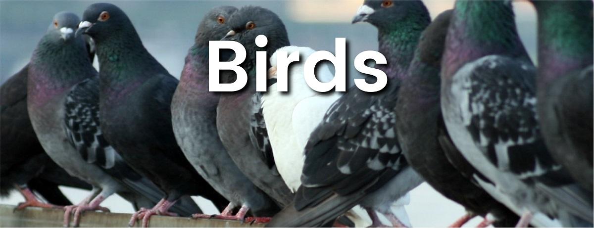 Bird Removal