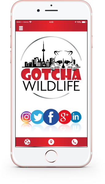 Gotcha Wildlife Mobile